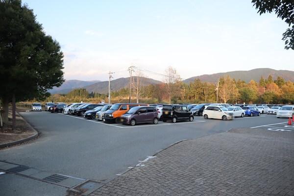 メタセコイヤ駐車場