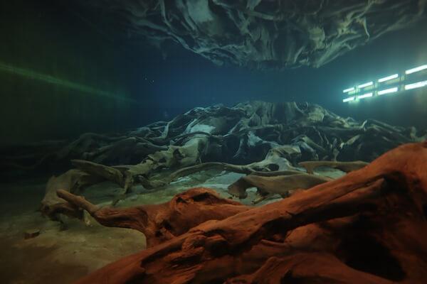 水の中の埋没林