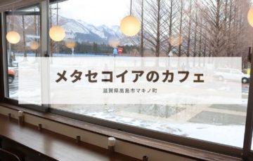 メタセコイアのカフェ