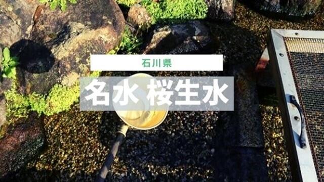 名水 桜生水
